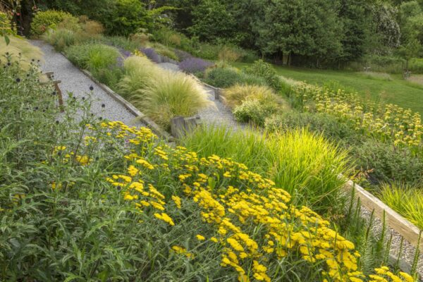 SOUTH HAYES, OXFORD: DESIGNER SARAH NAYBOUR: GARDEN ON A SLOPE - GRAVEL PATHS, ACHILLEA MOONSHINE, STIPA TENUISSIMA. SLOPING, SLOPES